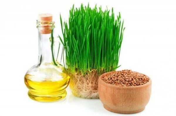 Какие противопоказания у масла зародышей пшеницы